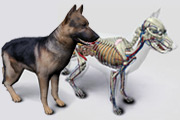 software anatomia do cão 3D