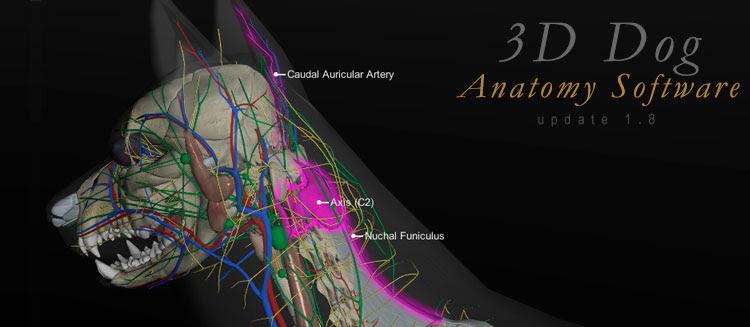 atualizações no software anatomia canina 3d