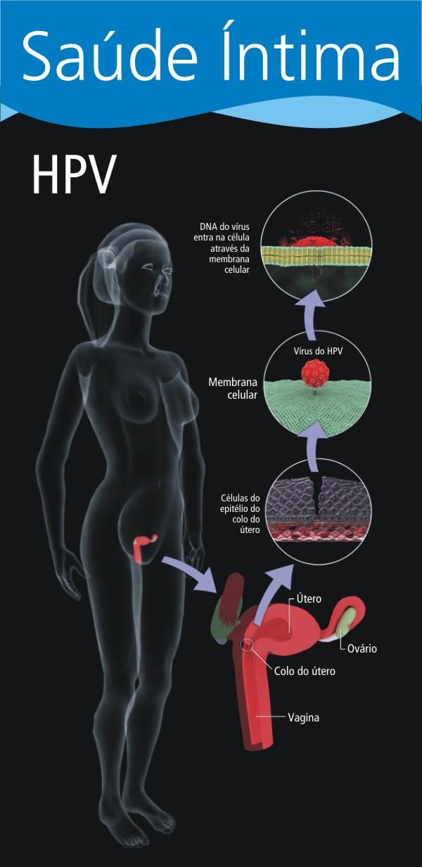 primeira etapa da infecção pelo virus do HPV