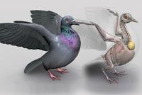 anatomia das aves em 3d