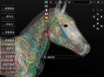 software anatomia do cavalo 3d