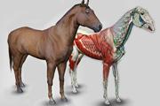 software anatomia equina 3D