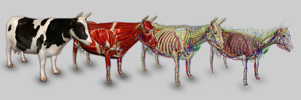 banner-sistemas-bovino-medium