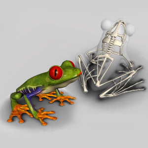 facebook-frog-skeleton