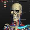 software introdução à anatomia humana 3D versão 1.71