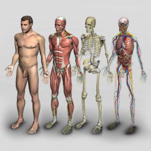 software introdução à anatomia humana 3D