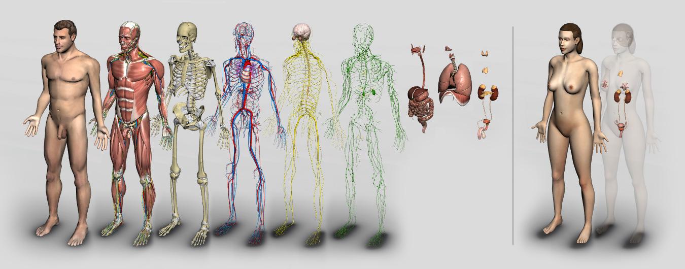 Introdução à Anatomia Humana 3D da Biosphera