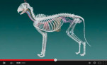 software-anatomia-felina-3d
