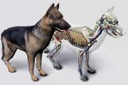 software anatomia do cão 3D