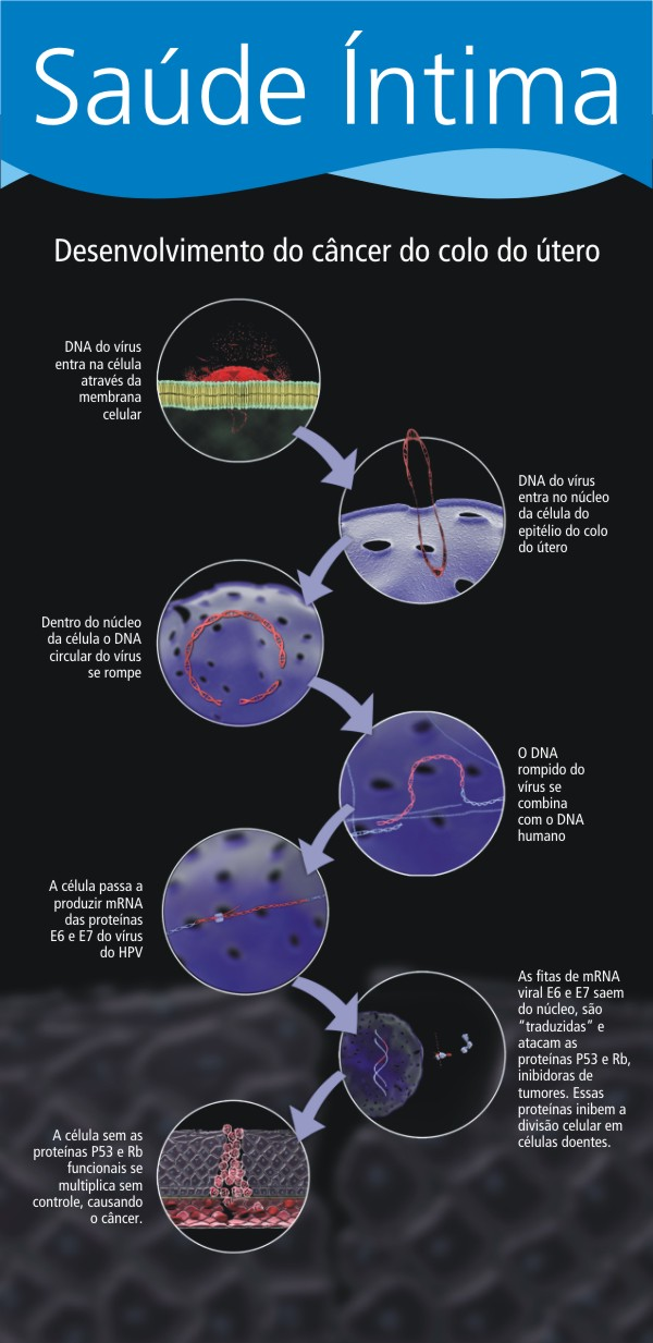 Dna do virus sendo incorporado ao DNA da Célula do epitélio do Colo do Útero