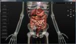 sistema digestório humano 3d