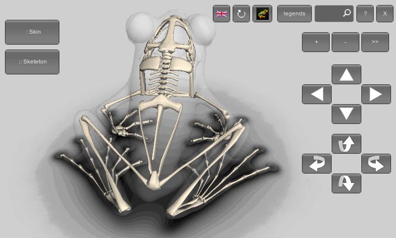 esqueleto de rã em 3d