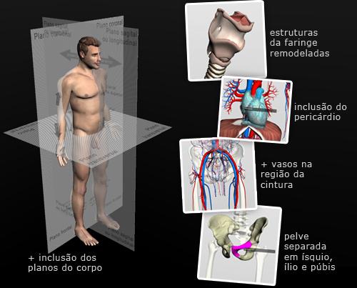 atualização software anatomia humana