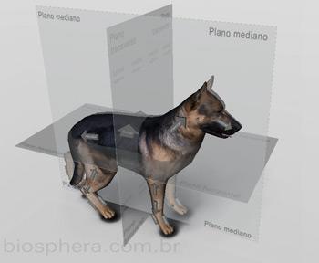 planos-anatomia-cachorro