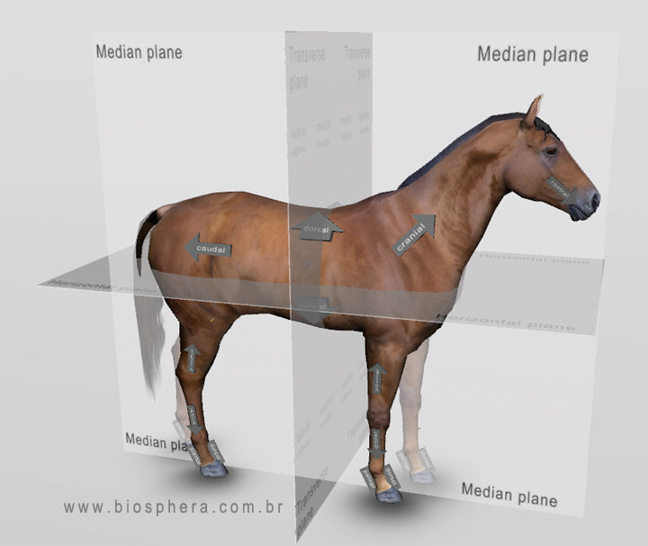 Equine Veterinary Anatomy 3d Horse Anatomy Software