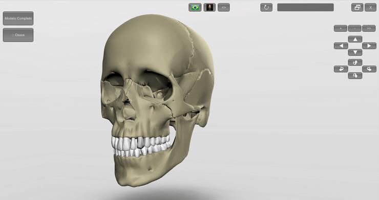 Crânio - software Introdução à Anatomia Humana 3D