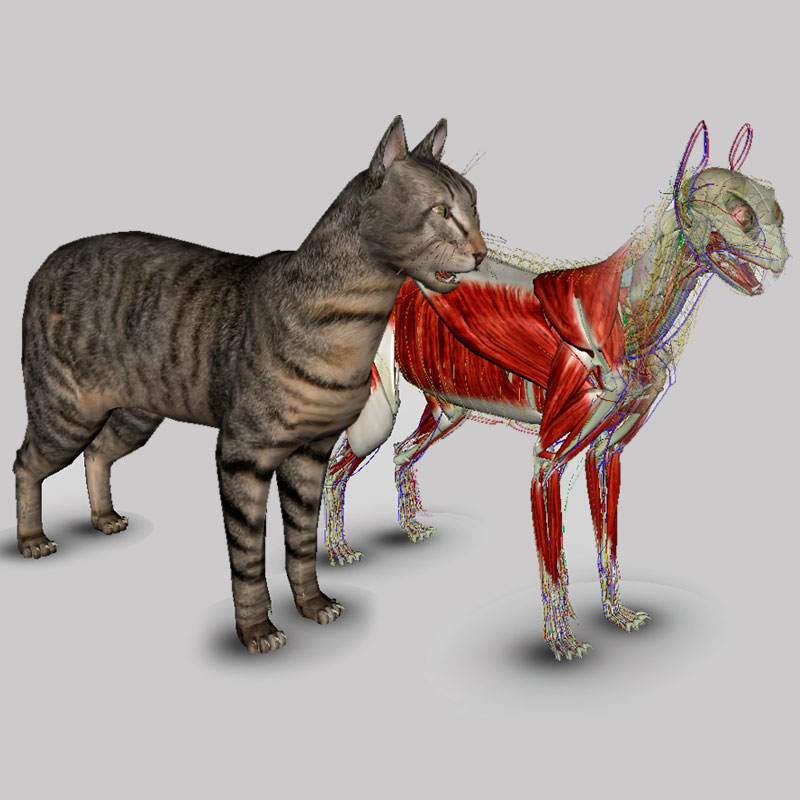 3D Cat Anatomy Software - biosphera.org