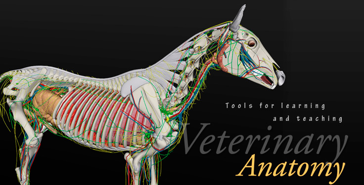 Biosphera: 3D veterinary anatomy softwares