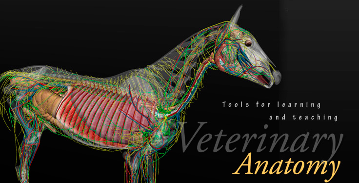horse anatomy software