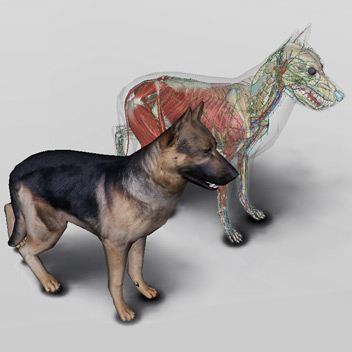 Canine Veterinary Anatomy: 3D Dog Anatomy Software