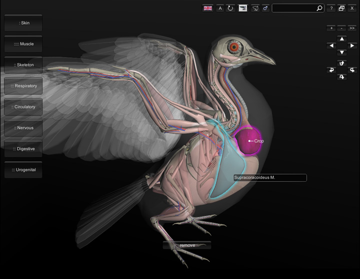 3D Bird Anatomy Software: release of version 1.0 - biosphera.org