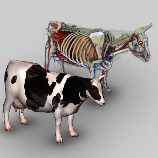 3D Bovine Anatomy Software - biosphera.org