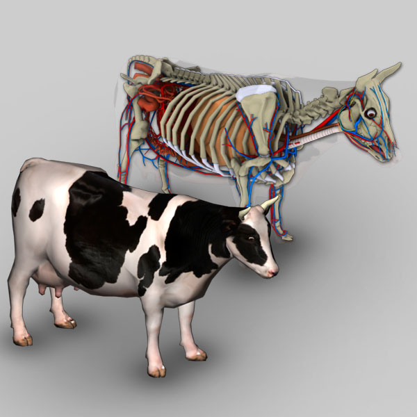 3d Bovine Anatomy Software Biosphera