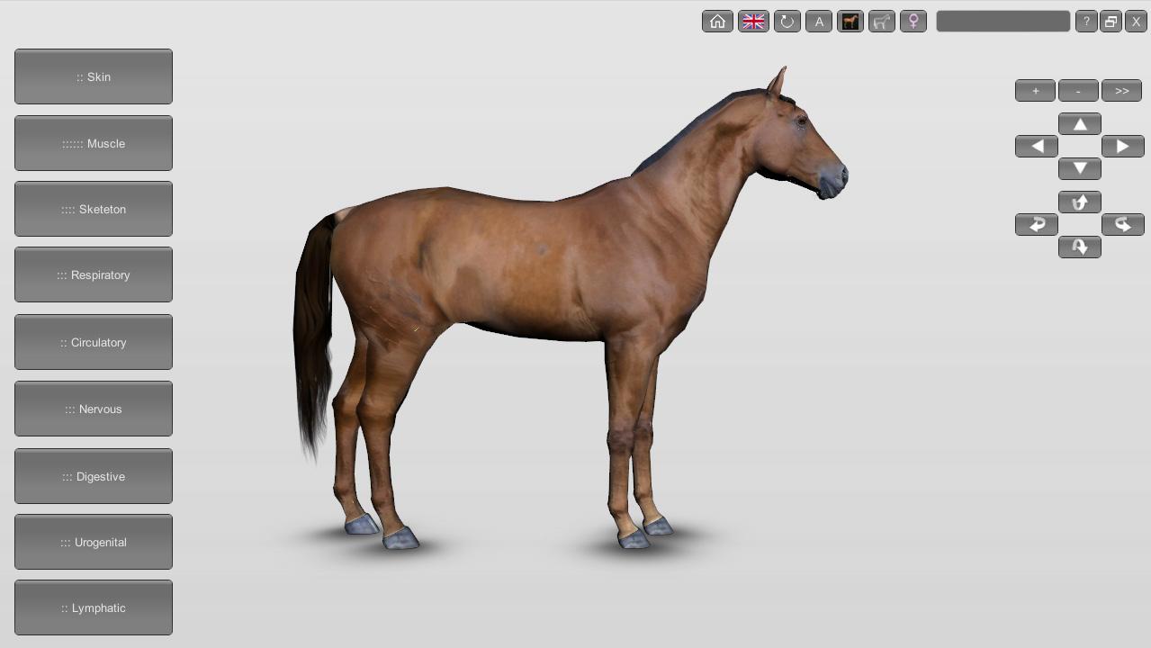 Tutorial How To Use Biospheras Veterinary Anatomy Software