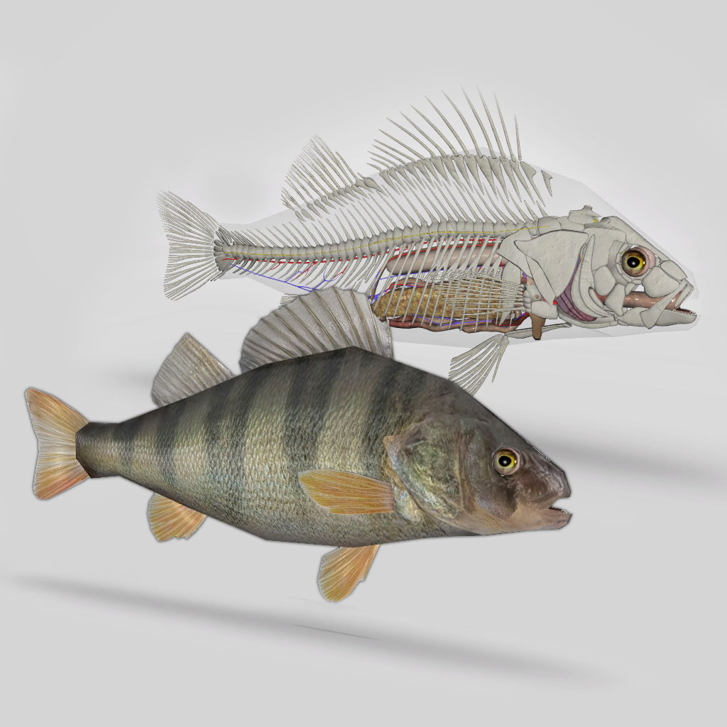 3D Fish Anatomy Software - biosphera.org